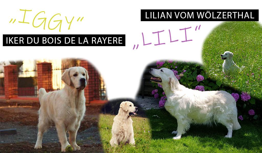 Iggy + Lili